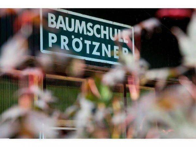 Baumschule und Gartengestaltung Prötzner